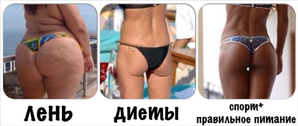 len-dieta-sport