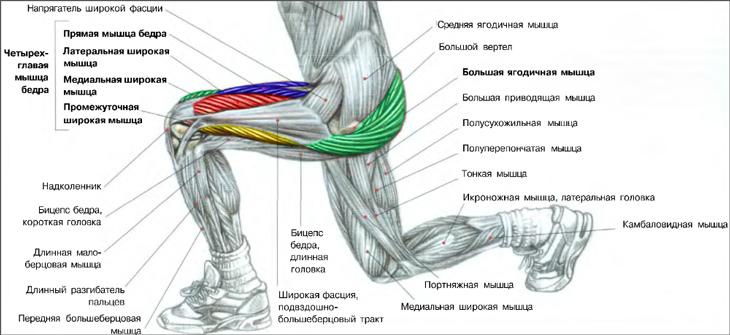 ТОП-4 упражнения для прокачки мышц передней поверхности бедра